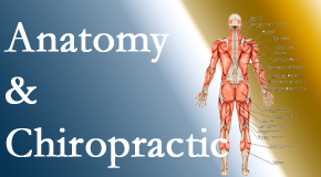 Dr. Hoang's Chiropractic Clinic confidently delivers chiropractic care based on knowledge of anatomy to diagnose and treat spine related pain.