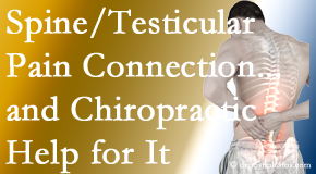 Dr. Hoang's Chiropractic Clinic shares recent research on the connection of testicular pain to the spine and how chiropractic care helps its relief.